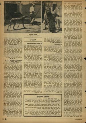 העולם הזה - גליון 1143 - 26 באוגוסט 1959 - עמוד 9   בנכס תרבותי בעל ערך שלעולם אי־אפשר יהיה לתקנה. ציד דובים בגרנלנד. הים היה כל חיי ב־ 14 השנים האחרונות. בגיל 14 עזבתי את הורי וששת אחיותי ויצאתי להכשרת צופי־ים