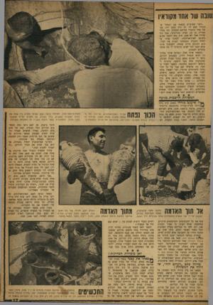 העולם הזה - גליון 1194 - 10 באוגוסט 1960 - עמוד 17 | שד אחו מקוראיו ,לפני שבועיים מצאתי את הבחור ש־הגורל קבע לי. זה היה נחמן לוי, בנו של אחד מחברי במושב הסמוך. זהו בחור מצויין. בן ,16 גבוה, ספורטיבי, בעל גוף