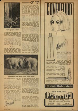 העולם הזה - גליון 1339 - 8 במאי 1963 - עמוד 2   האיפור ללא ערב השביתה באל־על, סיפר העולם הזה ( )1325 על הצוות הישראלי המטיס את המטוסים מניירובי ליוהנסבורג וחזרה, וש־אנשיו מתגוררים בקניה יחד עם בני משפחותיהם