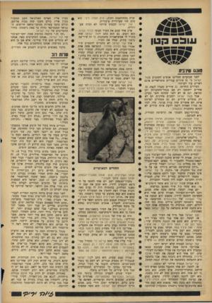 העולם הזה - גליון 1428 - 20 בינואר 1965 - עמוד 26 | אוכלי אדם, אל תאמיני לבחורים, אתה חיכית לי (וילנסקי־אלתרמן) ,דניאלה, ישמחו השמיים (נעימה מסורתית) ,טאנגו שין־בית, יפו, כושי כלב קט, כושי כושי שחור כליל, מושל