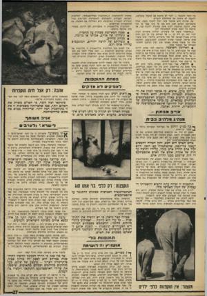 העולם הזה - גליון 1601 - 8 במאי 1968 - עמוד 27 | בין הזכר והנקבה — לזכר לא איכפת אם הנקבה מתחלפת, ולנקבה לא איכפת אם מתחלפים הזכרים. מה שקורה הוא שהזכר אינו יכול לתקוף נקבה, בגלל אינסטינקט המונע זאת. הוא מגן