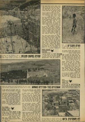 העולם הזה - גליון 1658 - 11 ביוני 1969 - עמוד 11 | חיים זהו אצלאן לוי, שומר בית־הקברות של העדה הספרדית והורס את הקברים ששופצו אחרי המלחמה. … בית־הקברות הספרדי חשוף כולו לשמש. … ושוב, קיים הבדל עצום בין החלקה של