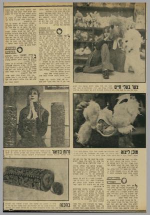 העולם הזה - גליון 1693 - 11 בפברואר 1970 - עמוד 25 | גם נערות בעלות חזה גדול באופן מיוחד. רבות מהן נבדקו על־ידי שוטרות. שיטה זו גרמה למכס האמריקאי בושות גדולות, כאשר בתולה זקנה אחת שהטבע היה נדיב אליה התבקשה