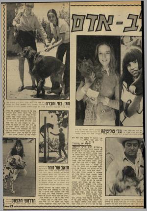 העולם הזה - גליון 1704 - 29 באפריל 1970 - עמוד 21 | חמי, בוז׳ וחנוה הוא סטר אירי נוסף שזכה בפרס. בין הגזעים אשר השתתפו בתחרות בלמו הכנענים, שהם גזע שפותח בארץ על־ידי הפרופסור רודולפינה מנצ׳ל. הם הוצגו לראשונה