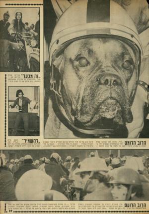 העולם הזה - גליון 1836 - 8 בנובמבר 1972 - עמוד 39 | ,זה מנעד עטרה מכריזה פרידמן ( 16ו חצי) ,תיכוניסטית תל־אביבית, שהשתתפה בהפגנה ,״לא אלבש את זה בשום פנים ! ״ הדוב הדומם ״חץ׳ /בולדוג זועף ושתקני שהיה אחד