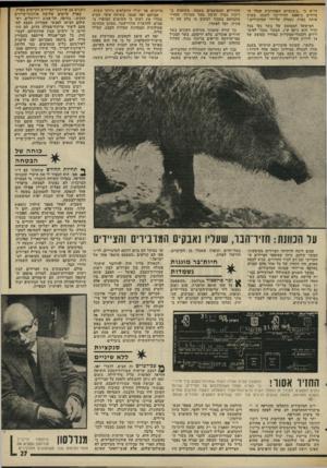 העולם הזה - גליון 1985 - 17 בספטמבר 1975 - עמוד 27 | החזירים המסוממים בשטח, משתמש ב ריכוז גבוה הרבה מעל המותר. החזיר מתמוטט בסמוך למקום בו בלע את ה־פתיון, וקל לאתרו. דו״ח כי ״בשנתיים האחרונות קטלו ה־ציידים כ־
