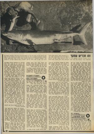 העולם הזה - גליון 2018 - 5 במאי 1976 - עמוד 31 | *11111111 כריש ממשפחת המקו, שנתפס מצפון לחוף־ הרחצה של אילת ימים מיספר אחרי שה־ הותקפה על ידי כריש בקירבת מקום, הצליחה להיחלץ עמו כחצי שעה. איכטיולוג (חוקר