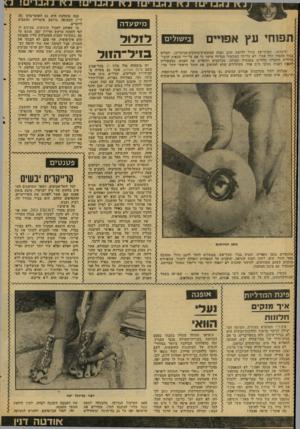 העולם הזה - גליון 2081 - 20 ביולי 1977 - עמוד 44 | מי סעדה תשחי עץ אפויים בי שו לי ם לוקחים: תפוחי־עץ מודל דלי׳ש־ס זהוב (אלד. הצהובים־מתוקים-מנוקדים) ,יוצרים בגוף התפוח חלל עגול׳ לא על־ידי המכשיר הגלילי הישר כי