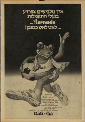 העולם הזה - גליון 2154 - 13 בדצמבר 1978 - עמוד 66   איד מלבישים צפרדע בנעלי התעמלות ...לאט לאט כמובן! ׳ נעל הספורט החדשה של ״גלי״-״ טורנדו״ 1יצרנים מעטים בעולם) יכולים להתגאות בנעל מסוגה ן סולית הפוליאריטן