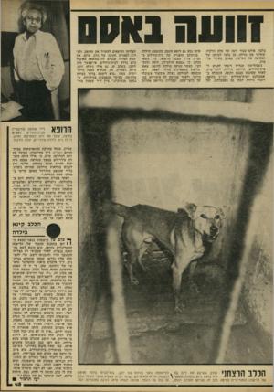העולם הזה - גליון 2215 - 13 בפברואר 1980 - עמוד 45 | זוועה נא ס בלבד, אולם עבור זינה היו אלה הדקות שחרצו את גורלה. הן גרמו למותה של הפעוטה בת הארבע, באופן מעורר פל צות. כשסוף־סוף הצליח רובחי להגיע ל- בית־החולים,