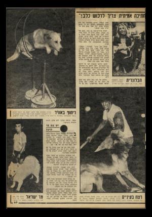 העולם הזה - גליון 2244 - 3 בספטמבר 1980 - עמוד 68 | ־ותינה אמיתית צויר לרכוש כלב!״ מהם בנפרד. החיים במחיצתו של כלב אינם משעממים לעולם. יש לי שישה כלבים בבית, וכל אחד מהם הוא אי שיות בפני עצמה.״ לאווה אייריש־סטר,
