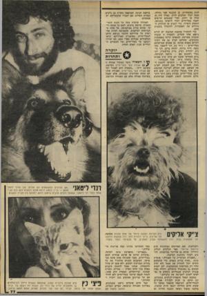 העולם הזה - גליון 2283 - 3 ביוני 1981 - עמוד 77 | לנוע בחופשיות. כן תוכננה חצר גדולה, שבה יוכלו הכלבים לרוץ, כאילו היה זח שדה או רחוב, וכדי שאנשכם הרוצים לאמץ בעל־חיים יוכלו לראותו בתנועה. התאים הופרדו, כדי