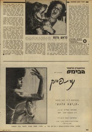 העולם הזה - גליון 2283 - 3 ביוני 1981 - עמוד 80 | ל שיר למען הכלבים גם הזמר דני ליטאני, המגדל כלבים מילדות, חושב שצריך להקים אגודה נוספת, מהר ככל האפשר. כי האגודה הקיימת קטנה מלענות על כל הדרישות וכדי שתיפסק