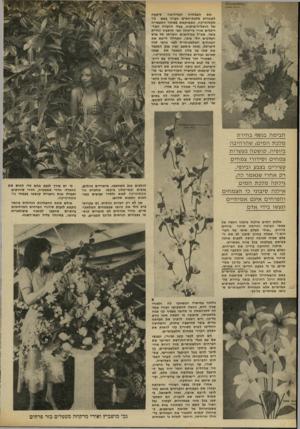 העולם הזה - גליון 2301 - 5 באוקטובר 1981 - עמוד 22 | את הצמחיה המדהימה סיפקה לתחרות מלכת״המים חברה בשם גור אקסוטיקה, הממוקמת באיזור התעשייה של הרצליה־פיתוח. בעלי החברה האדריכלים אורי מרקוזה וגבי מושביץ ונורית