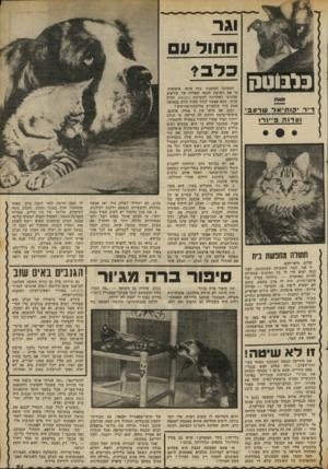 העולם הזה - גליון 2308 - 25 בנובמבר 1981 - עמוד 61 | וגר ח תול 11 בלב * מאת ד״ר יקותיאל שרעבי ועדנה פיינר! תחולה מחופשות בית שלום, מיאדלבם, זו אני, תמר, החתולה שבתמונה. לפני כמה ימים היו לי כל הסיבות שבעולם להיות