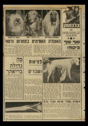 העולם הזה - גליון 2347 - 25 באוגוסט 1982 - עמוד 59 | אלא שהפעם מדובר בפורט־דה־ורסאי, איזור הירידים בפאריס, שם נערכה התחרות הבינלאומית ה־ 104 לכלבים.