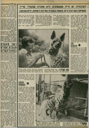 העולם הזה - גליון 2404 - 27 בספטמבר 1983 - עמוד 57 | — פורום ל שיסלת יש חיית שעשועים. היא אוכלת שוקולד מריר, משחקת עם הכלבים. נוסעת במונית ומרבה לצחוק. היא צבועה. ץ ץד*י בו ק ר נכנסת בבה למכונית ^ /ש ל מיתה,