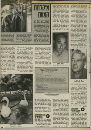 העולם הזה - גליון 2405 - 5 באוקטובר 1983 - עמוד 45   אלמנטאריים. לכן הועברו הברבורים מנמל־התעופה הישר למישקו של מעיין בקדימה. ד״ר מרוז השגיח על ההסגר. כשהברבורים סיימו את ההסגר, ד״ר מרוז ערך להם בדיקות דם ואחרות