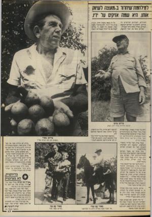 העולם הזה - גליון 2658 - 10 באוגוסט 1988 - עמוד 17   דגירחמת־שיחווו ב..גועצה לשיווק אותו. היא שגה אזיקים על ידיו. המגדלים, הקבלנים, המייצרים והאורזים. היחסים בין הפרדסן׳ למועצה תמוהים, כאילו נלקחו מימי העבדות.