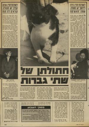 העולם הזה - גליון 2686 - 22 בפברואר 1989 - עמוד 13 | לשוכת־הדין נירה לידסקי יש חתולה. שמון מאשיטה לעווכת־הדין עדנה קנלן יש חתולה. קוראים לה תות ולא סיפרו את הסיפור שתיים /מעורכות־הדין המובילות במדינה, היה קשה