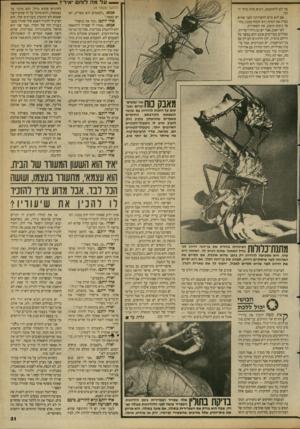העולם הזה - גליון 2689 - 15 במרץ 1989 - עמוד 31 | > — ע ל מה לו ח י איר? מד לא להתקמצן, ויביא טרף גדול יותר. הוא סיים להפרותה לפני שהיא גמרה את הטרף, הוא יחטוף ממנה, בחוסר נימוס מופגן, את השאריות. לא ייאמן,