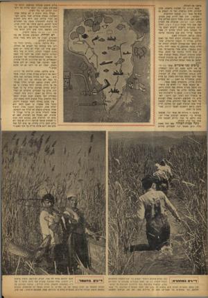 העולם הזה - גליון 755 - 15 באפריל 1952 - עמוד 4   שישנו את האוירה. אנשי חולתא זכו לאדמות נרחבות, חלקן יהודיות, חלקן נטושות. דבר זה השפיע גם הוא על אנשי יסוד, שתבעו התרחבות. ובעיקר: הדג החל להיות עסק מכניס.